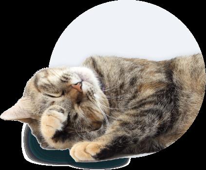 Produkte für Katzen