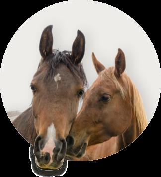 Produkte für Pferde